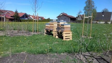 Bienenvölker bei Naturkost Übelhör