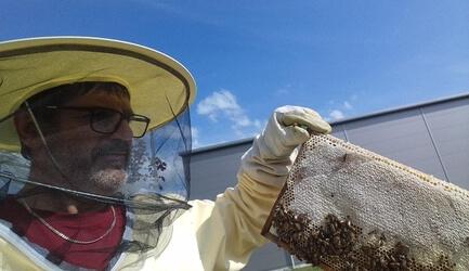 Die NKÜ-Bienen sind fleißig