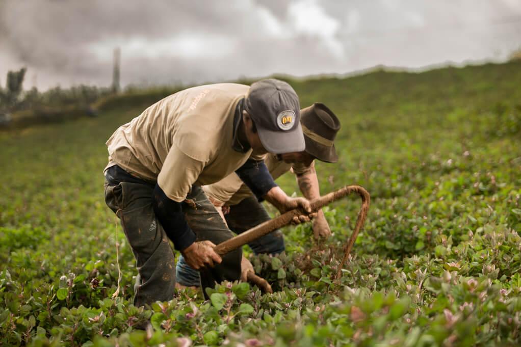 Quinoaanbau  Peru Bild Naturkost UEbelhoer