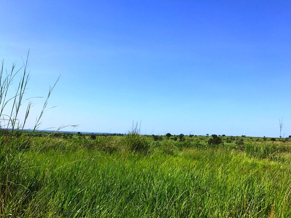 Chia Uganda Bild Naturkost UEbelhoer.JPGChia Uganda Bild Naturkost UEbelhoer